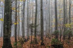 Autumn Mood (*Capture the Moment*) Tags: 2017 bavarianforest bayerischerwald bäume fog forest fotowalk landschaften natur nature nebel sonya7m2 sonya7mii sonya7mark2 sonya7ii sonyfe2470mmf4zaoss sonyilce7m2 trees wald wetter