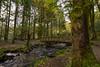The Bridge (jasty78) Tags: bridge path forest autumn queenelizabethforestpark trossachs aberfoyle highlands scotland nikon d7200 sigma350mmf14