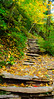 Ricketts Glen (charlie_guttendorf) Tags: autumn forest guttendorf nikon18200mm nikond7000 pastateparks rickettsglen rickettsglenstatepark fall outdoorphotography outdoors outside padcnr staircase stone trees wilderness