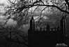 October Gothic (Hi-Fi Fotos) Tags: ppg building pittsburgh tree gothic architecture city urban silhouette shadow desolate cold scary sky branches moody mono bw blackandwhite nikon d5000 hififotos hallewell noir