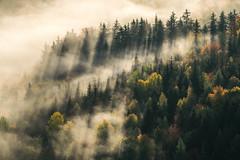 Magic moments (sebastian.marek) Tags: nikond5300 rudawy janowickiekotlina jeleniogórskasokoliksunrisepolskapolandfogmisttreeforestpanoramalandscapeoutdoorrudawy landscape parkkarpnikimiedziankatrzcińskokrzyżna górawschód słońca mgła tamronadaptall2sp60300mmf385423a