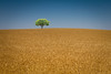 a hill with a tree, some birds & no sea (cheezepleaze) Tags: hill tree sky birds notmuchelse simple wheat hss crop brown dry
