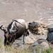 Mara Safari-9889.jpg