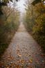 IMG_4041 (Niki.Suppan) Tags: vienna autumn fall october oktober herbst wien wanderung wandern leopoldsberg hügel herbstfarben fog nebel nebelig wanderpfad stadtwanderweg canon eos ef 2470mm 28 f28 dslr slr spiegelreflexkamera vollformat fullframe 5dii
