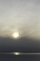 Flight (jessicalowell20) Tags: bay bird black clouds cream dusk evening flight goldenhour gray horizon land longbeachisland loveladies newjersey northamerica ociean seagull september short sky slate summer sun sunset white