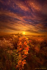 In Perfect Solitude There Is Grace (Phil~Koch) Tags: inspirational season beautiful peace hope love joy dramatic unity trending popular canon camera rural fineart arts shadow sun sunrise flowers light wisconsin shadows outdoor field meadow autumn fall colors trees sunburst