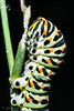 BICHO (juan carlos luna monfort) Tags: bicho gusano bug macro nikond7200 sigma1750 naturaleza insecto