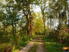2017 deutschland germany süddeutschland southerngermany... (Photo: warata on Flickr)