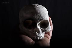 To be, or not to be (Normann Photography) Tags: halloween macromondays scull elinchromedlite4400w hmm caput closeup creepy head hodeskalle humanbodyparts macro nosoftbox scary sidelight sidelit strobelight