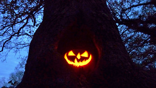 Pumpking In The Tree