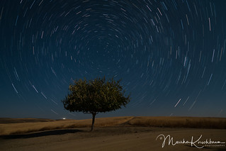 Mulberry Star Trails in the Moonlight