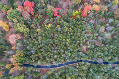 Trees changing (sephrocker) Tags: drone p4 trees autumn fall forest aerial path nature