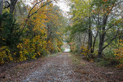 Colorful country road (DT's Photo Site - Anderson S.C.) Tags: canon 6d sigma 35mm14 art lens country road andersonsc southern scenic autumn fall colorful landscape upstate gravel dusty path yellow orange southernlife november october 2017 america usa pastoral rustic
