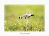 Helios 44-M 2/58  Canon 6 D (Janny.K) Tags: m42 helios44m258 superbokek sosimplesobeautiful vintageoptica photofacts zoomnl ngs bokehofvintagelenses canonphotography canon6dusergroup earningsstockphotos dutchnature passionbokeeh photography with classicandmanua focuslenses ngc helios442