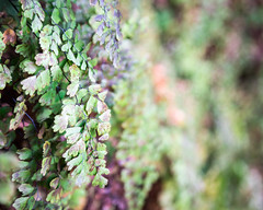 Hanging Gardens (Sunset~Beauty) Tags: canon eos 6d ef 24105mm f4l is usm arizona green leaves garden bokeh