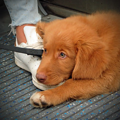 Tube Train Puppy! (RiverCrouchWalker) Tags: tubetrainpuppy puppy foot tube london pet dog cute
