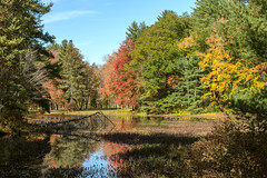 Peace (Chancy Rendezvous) Tags: howe howestatepark spencer spencerstateforrest fall autumn foliage leaves pond water lake reflection massachusetts newengland forrest woods park chancyrendezvous