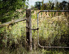 Locked (HFF) (13skies) Tags: fencefriday gate locked grasses green woodandwire keepout notrespassing barrier barricade farmersfield private privateproperty chain trees 13skies sonyalpha99 happyfencefriday