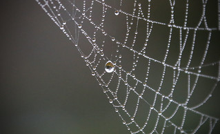 Web with Reflective Drop