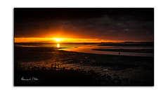 Golden River (RonnieLMills) Tags: dawn early morning daybreak sunrise islandhill low tide enler river strangford lough comber newtownards county down