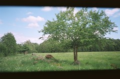 Apple Trees (ŽivilėZ) Tags: apple tree home rural lithuania green summer
