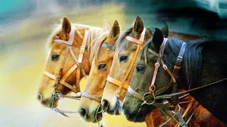 Four Horses...