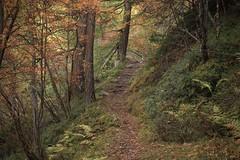 vallon d'Arby (bulbocode909) Tags: valais suisse latzoumaz vallondarby montagnes nature forêts arbres sentiers automne vert rouge