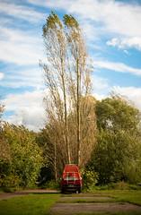 L1000127 (Rene_1985) Tags: leica m 240 50mm noctilux herbst fall bully vw tree baum birke