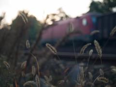 PA106920 (Dreamaxjoe) Tags: railway sunrise surroundings