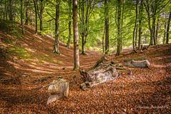 Forest walk... (moraypix) Tags: forestwalk forest sunnyafternoon