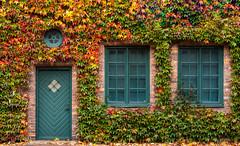 Autumn dress (Eldkvast) Tags: fs171015 hostfoto fotosondag autumn röd grön gul hus house löv leaf window fönster tegel