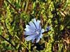 DSC04251 (vincentp17) Tags: fiore colori profumi emozioni natura fotografia fotografi fotografare