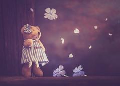 Yasmine (Ro Cafe) Tags: stilllife littlebear bear toy miniature flowers petals jasmine dark nikkormicro105f28 nikond600 teddy