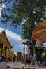 Pray for (HiROaK SaNEyoCiy) Tags: thailand thai southeastasia temple gold tree building タイ 寺院 祈り 東南アジア アジア asia asian pray pentax k3ⅱ 1685