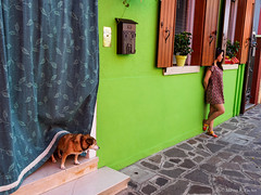 P9264695.jpg (marius.vochin) Tags: oldcity colorful oneman trip travel funny burano dog streetphotography venice houses city italy outdoor venezia veneto it