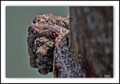 Collés Serrés (marc.lacampagne) Tags: dof canon eos 90mm 28 closeup tamron mer rouille rust old agé abandonné ngc hdr hdraward