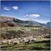 Visso (Mc) (www.turismo.marche.it) Tags: macerata provinciadimacerata visso destinazionemarche marche montagne montagna veduta panorama colline collinemarchigiane verde alberi pecore animali erba campo pastorizia