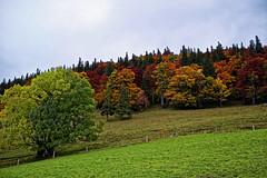 Herbstfarben Wanderung