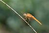 Dragonfly (luporosso) Tags: natura nature naturaleza naturalmente nikon nikond500 libellula dragonfly insect insetto macro closeup