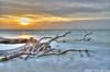 Treibholz bei Sonnenuntergang (tilos.fotoservice) Tags: hdri bornamdars mecklenburgvorpommern deutschland fischland darss