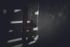 _DSC6154 (john_fj) Tags: d7100 50mm 18 50mm18d nikkor nikon blackandwhite black white