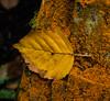 I #LoveAutumn (northdevonfocus) Tags: autumn plant flora floraandfauna flowers