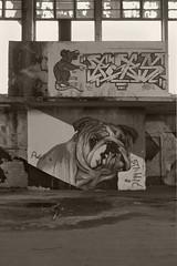 _MG_2690 (daniel.p.dezso) Tags: budapest graffiti nagyvásárcsarnok urbex abandon ruin hungary