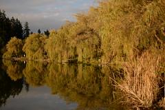 Lost Lagoon Evening (Graham Fair) Tags: vancity lostlagoon stanleypark photopity