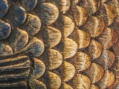 Pisces (ildikoannable) Tags: fish pattern closeup olympus macromondays zodiac pisces scales