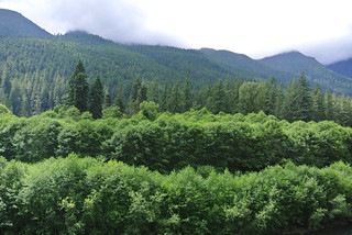 Olympic Mountain Dreams day 4 - layers of greenery