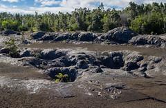 K3_P2738-HDR-sRGB (mountain_akita) Tags: hawaii kilauea maunaulu treefern fissure lava lavashield volcano