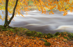 Autumnal Flow (Julian Barker) Tags: the strid bolton abbey north yorkshire england uk europe autumn autumnal flow river water moving movement fast flowing leaves litter bank bankside fall nature canon dslr 600 julian barker landscape wood tree