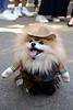 Tompkins Square Park Dog Parade (Samicorn) Tags: nikon nyc halloween park dogs puppies dog doggie doggo goodboy newyorkcity manhattan city costumes october fall autumn gothamist lowereastside village 2017 pomeranian fluffy sheriff cowboyhat