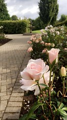 🌺🌺 (staceygallagher2) Tags: flowers photography scenic wishingwell wish flower pink nature well roses